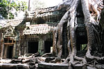 Gargantuan tree roots have engulfed - and damaged - the popular Ta Prohm temple.