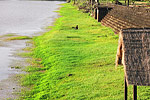 A giant moat, measuring 1.5km by 1.3 km, surrounds the Angkor Wat temple complex.