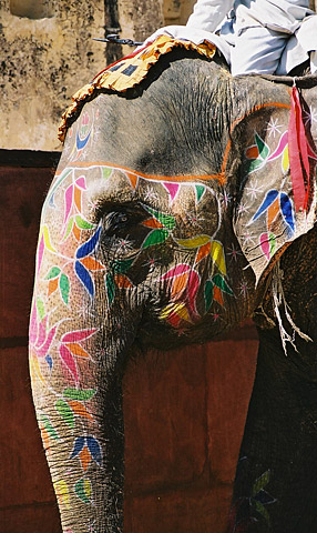 A hand-painted elephant at work at the grand Amber Fort. The animals are used by tourists to ascend what was once the ancient capital of Jaipur state.