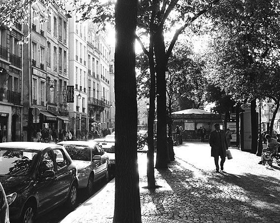 Sunlight streaks through trees in the St Paul district of Le Marais.