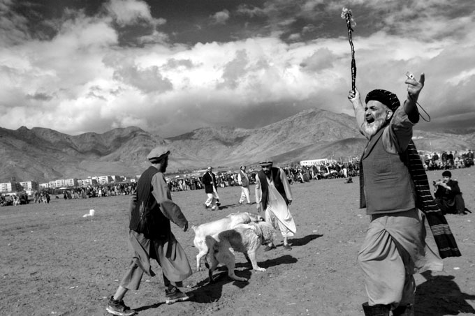 The referee of a dogfight stirs up the dog owners and crowd as 2 fighters go at it. The pastime is often attended by hundreds if not thousands of Afghans on many Fridays, the muslim day of rest.