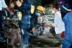 A doctor checks a weary search dog on the night of September 12th.
