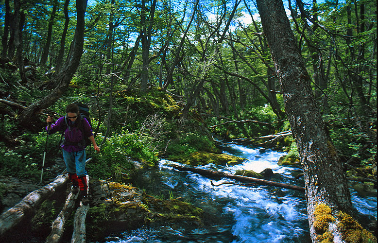 Notwithstanding the voracious appetites of the beavers that were introduced some 70 years ago, the forests of Southern Beech (Nothofagus) are one of the joys of Tierra del Fuego. Hiking below the treeline is a laborious business, but the tranquil charm of these ancient woods is something specialNikon FM2, 24mm, Fuji Velvia