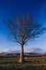 arran_winter_tree