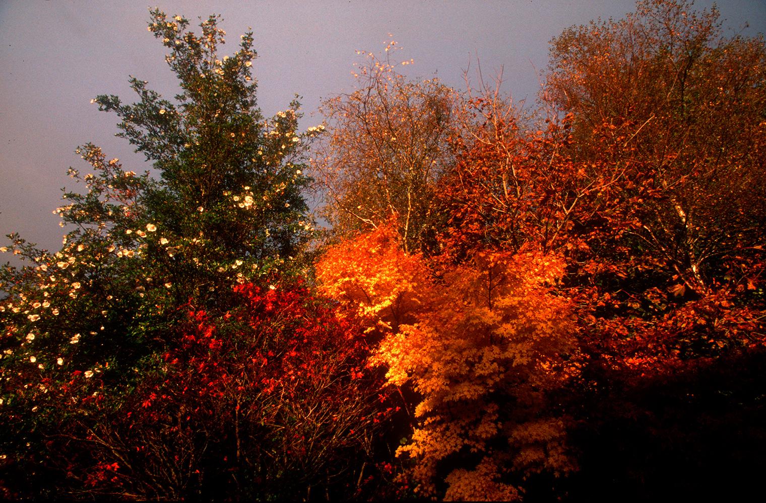cork_autumn_01