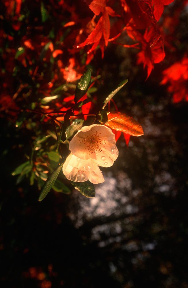 cork_autumn_02