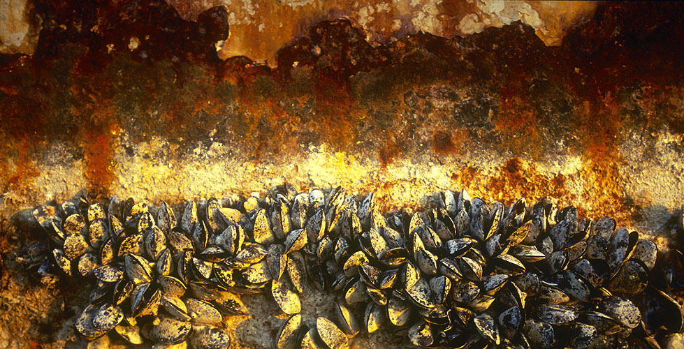 Detail of the rotting hull of an old freighterNikon F5, 180mm, Fuji Velvia 100