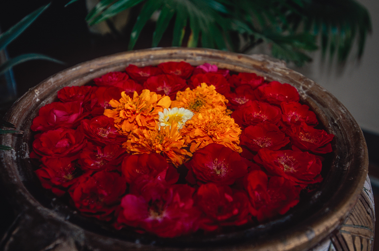 haridwar_temple_flowers_2004RVP