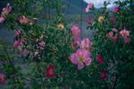 Blooms at DachiganNikon FM2, 50mm