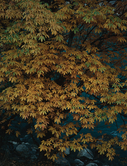 Autumn glory in the Humla Karnali valleyProject VeronicaMedium format images re-scanned in a professional glass film- holder with my Nikon Coolscan 9000 and Silverfast 8 software. These images display larger on the site - enjoy!Bronica ETRSi, 50mm, Fuji Velvia