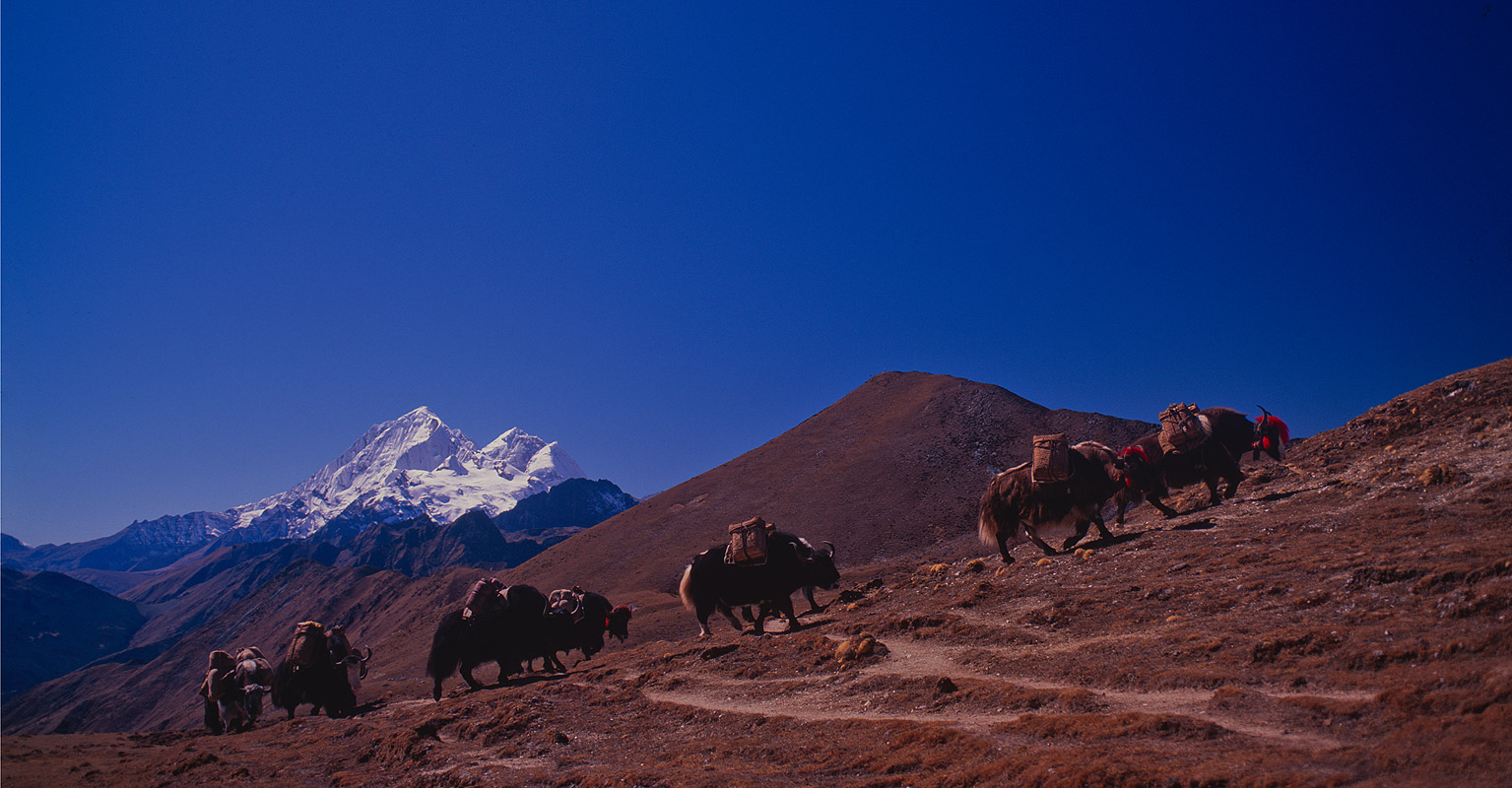 Yak train cresting the pass from the west, which forms the boundary between the districts of Lingshi & Laya. The peaks beyond are Jitchu Drake, Tsheri Kang & ChomolhariNikon FM2, 24mm, Fuji Velvia