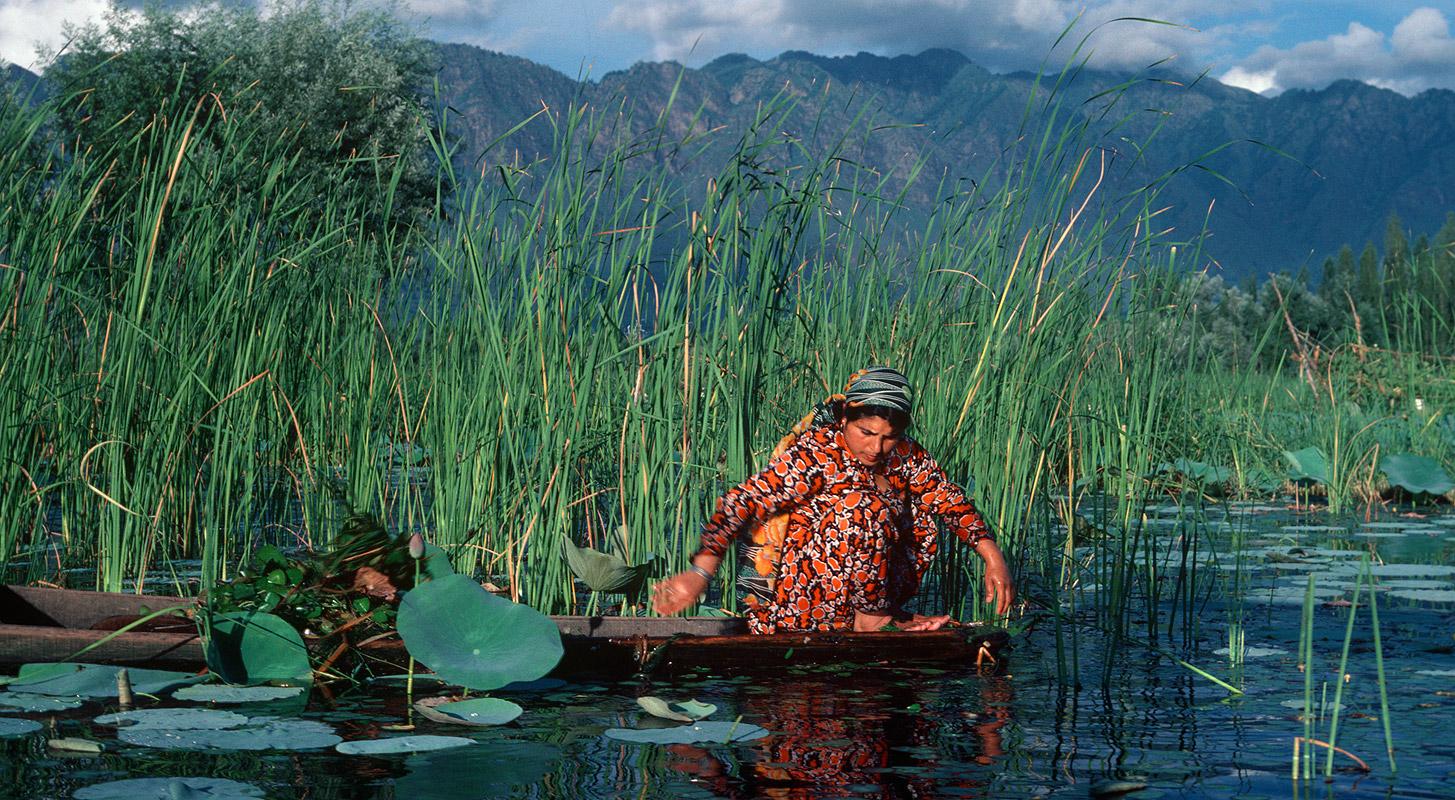 On Dal Lake, Srinagar, KashmirKodachrome 64, Canon A1, 135mm