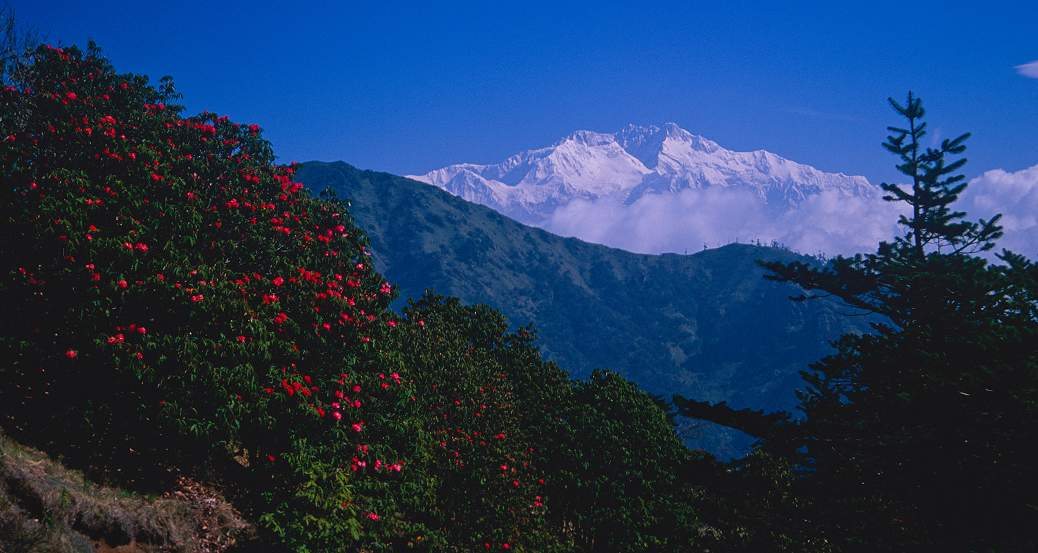 The Sandkphu ridge is a lower section of the Singalila. This was taken on a spring trek there, hence the rhododendrons in bloom.Nikon FM2, 24mm, Fuji Velvia