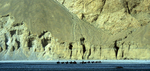 A camel-train bound for the north side of K2 in the Chinese KarakoramNikon FM2, 105mm, Fuji Velvia