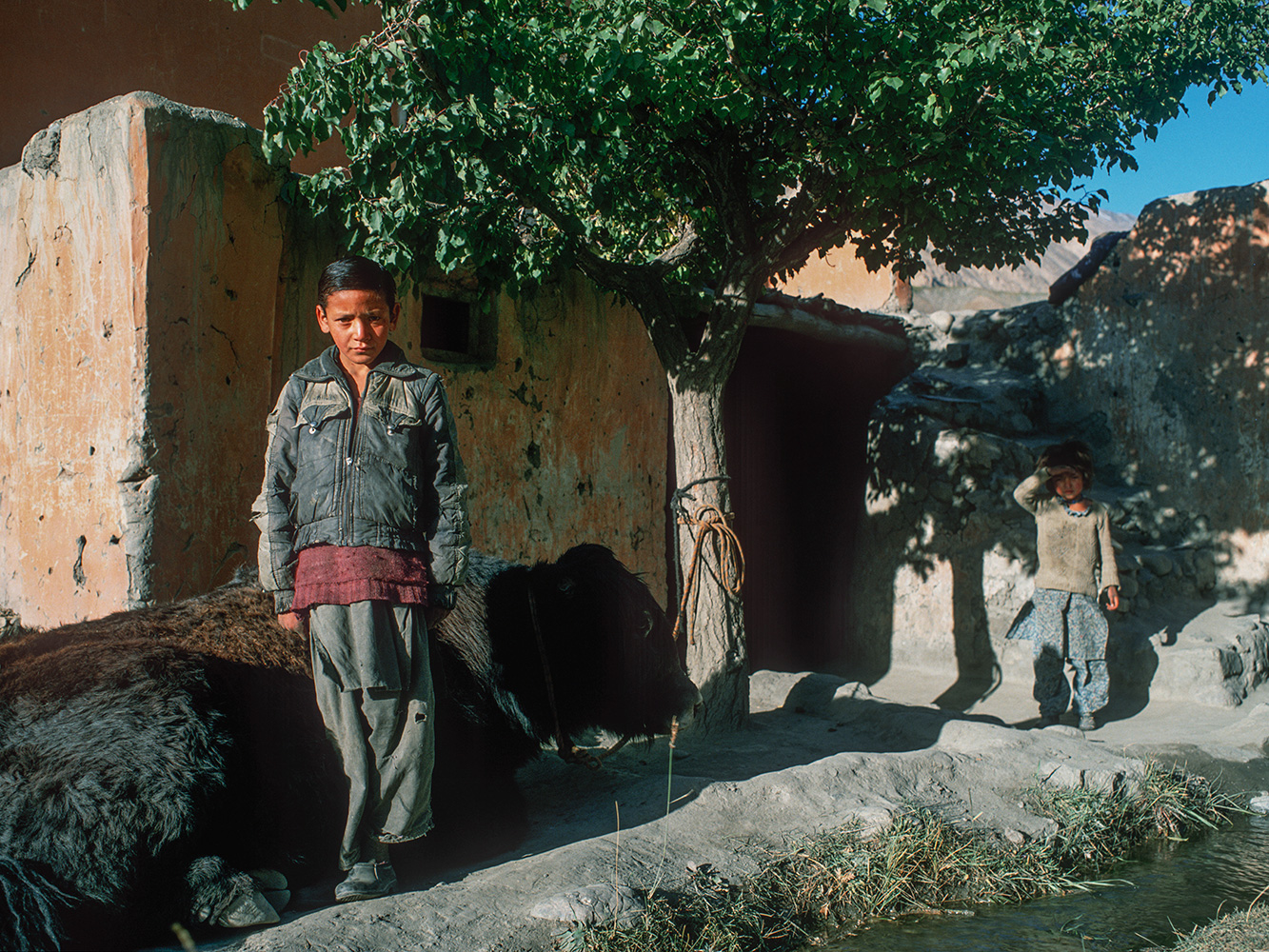 A boy and his sister minding their father's yak at home