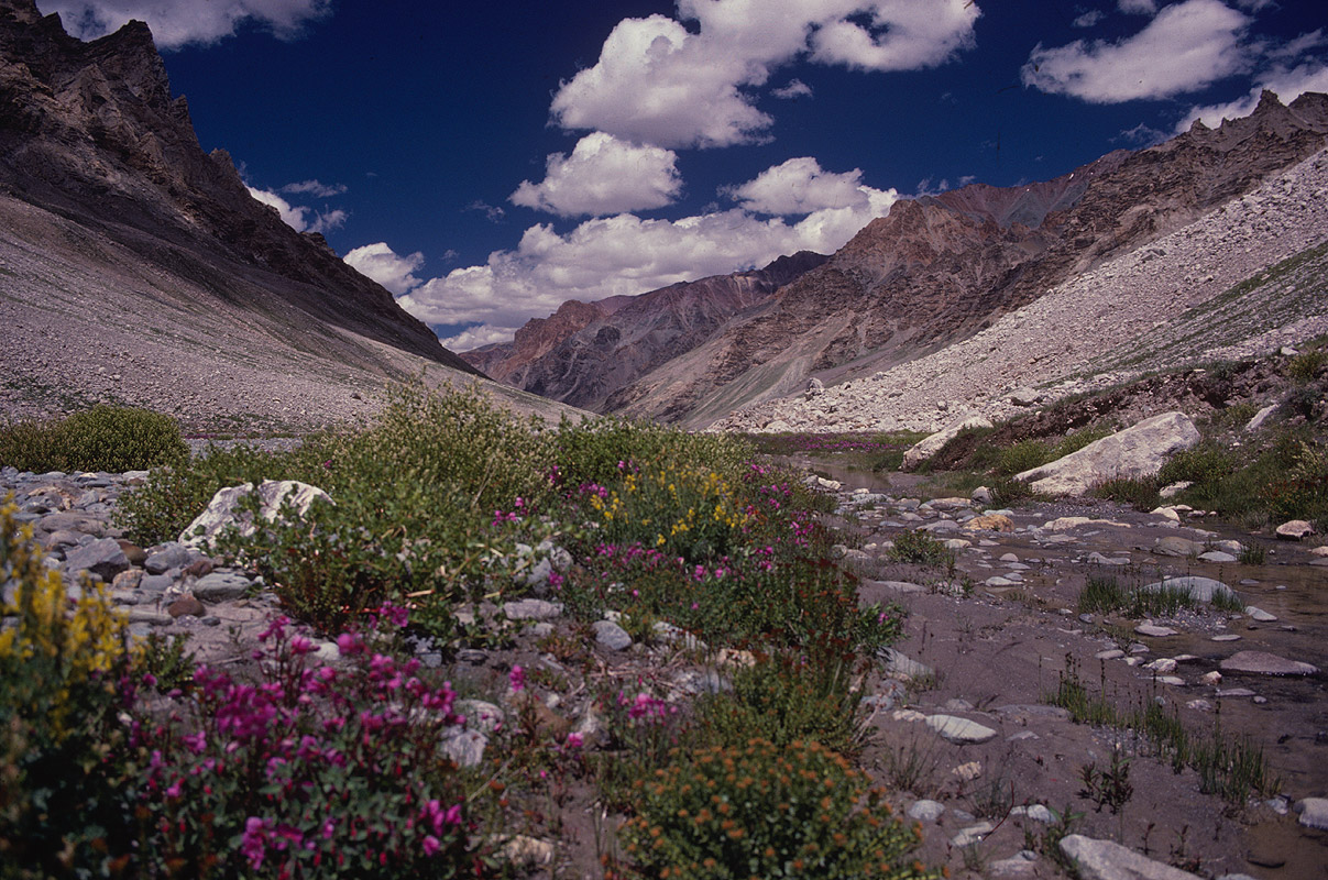 Flowers in the valley below the passCanon A1, 28mm, Kodachrome