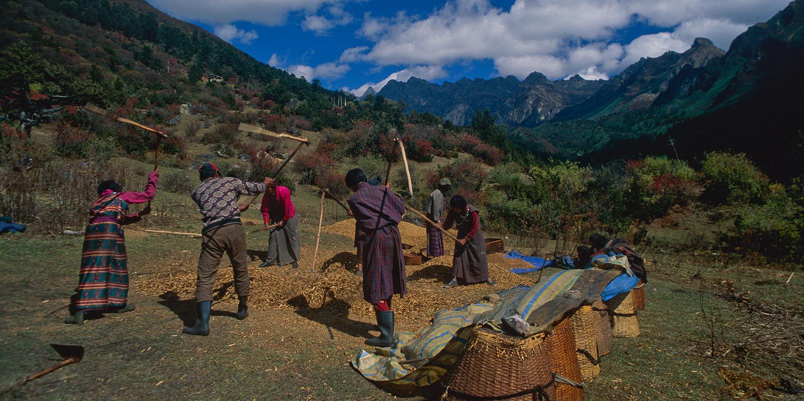 Villagers threshing wheat Bronica ETRSi, 50mm, Fuji Velvia