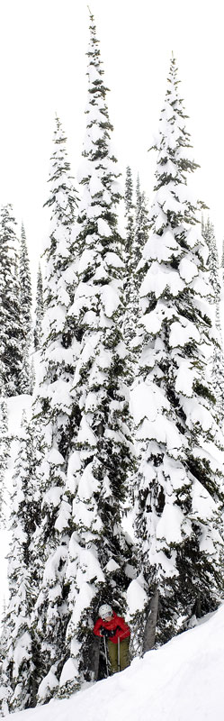 Janelle Miller stands beneath the protective limbs of some tall pine trees at Island Lake Lodge, BC.