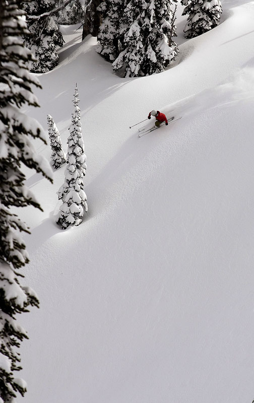 Janelle Miller pickes a sweet line through the trees into the untracked powder at Island Lake Lodge, Fernie, BC.