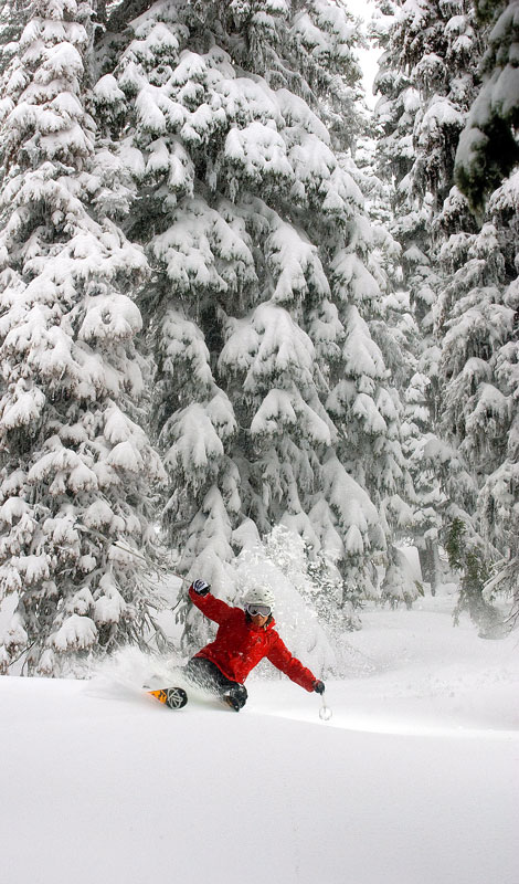 Skiing tree lines is where it's at on stormy unstable days. Janelle Miller at Island Lake Lodge, Fernie, BC.