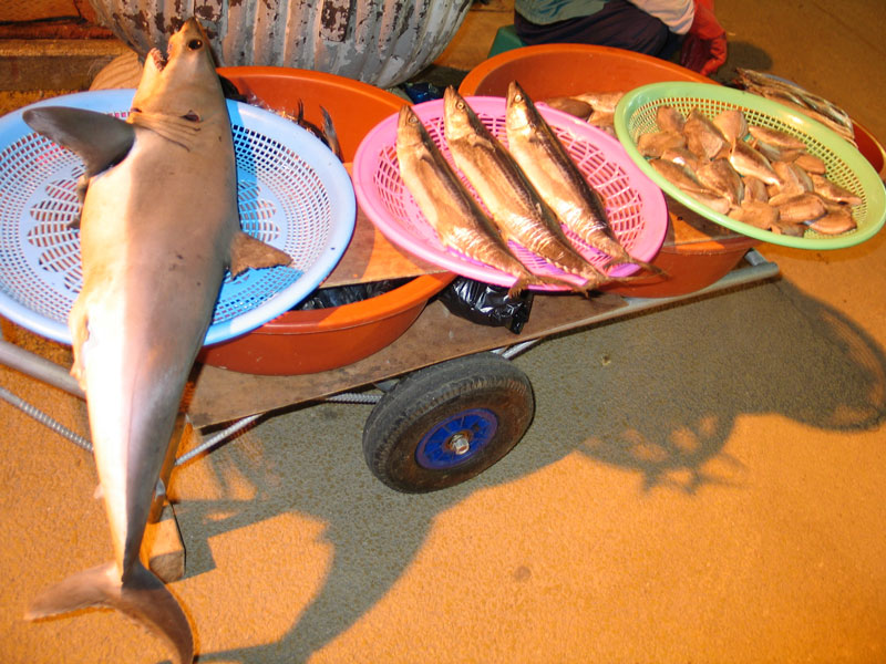 A shark is on display along with other fish in Gukje Market in Busan, South Korea.