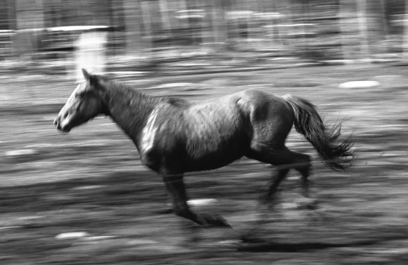A horse gallops through an open field.