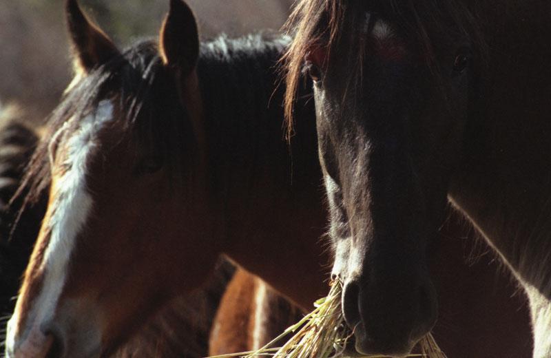 A horse grazes in the field.