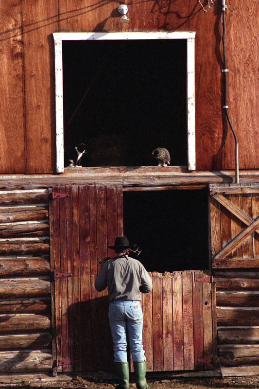 Two barn cats sit on a window ledge and watch the action below.