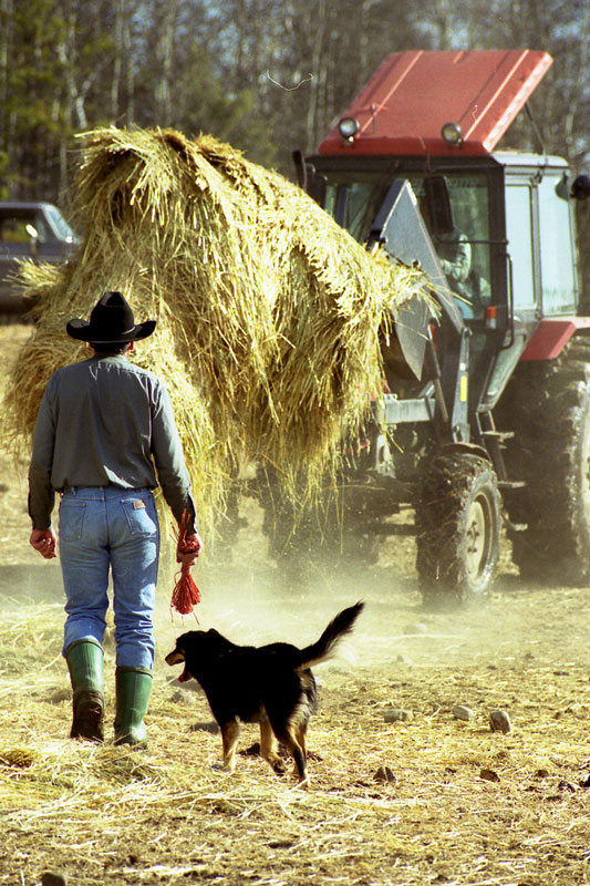 A rancher with his trusty dog, checks on the progress of the spreading of the hay.