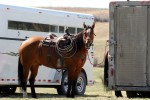 A horse is saddled and ready to head out on the range.