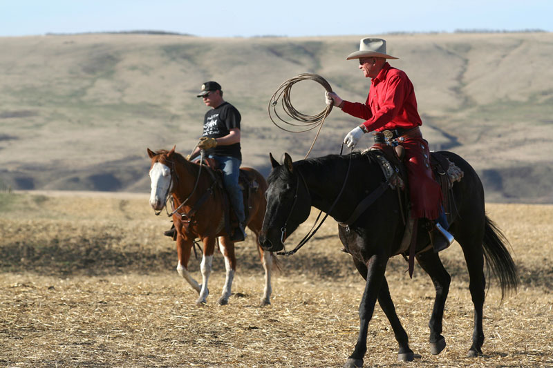 Two cowboys advance on the herd as they prepare to rope a calf.