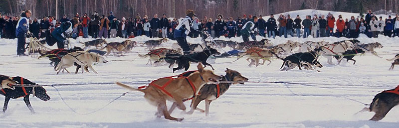 Dog teams dash out to start the 50th annual Canadian Championship Dog Derby in Yellowknife, NWT, Canada.