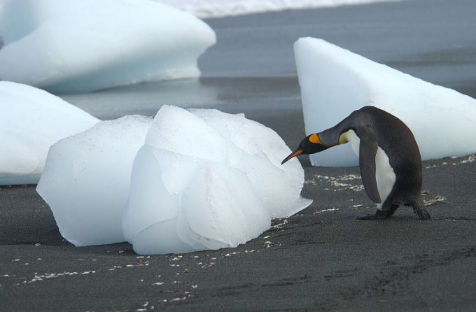 Antarctica13