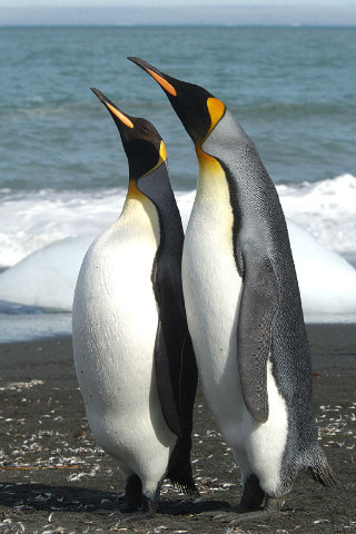Antarctica16