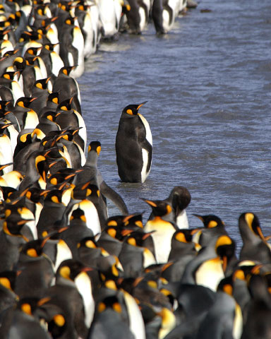 Antarctica19