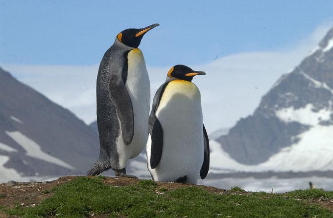 Antarctica20