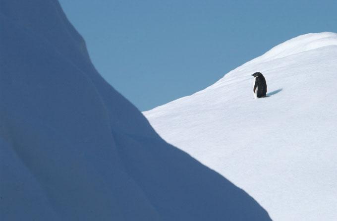 Antarctica23