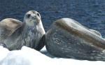 Antarctica24