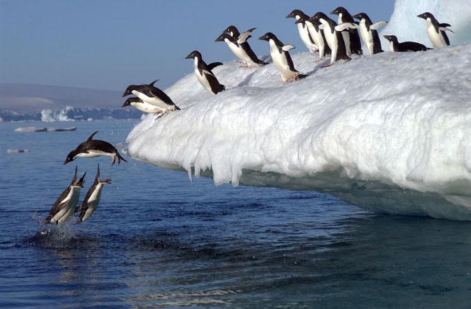 Antarctica25