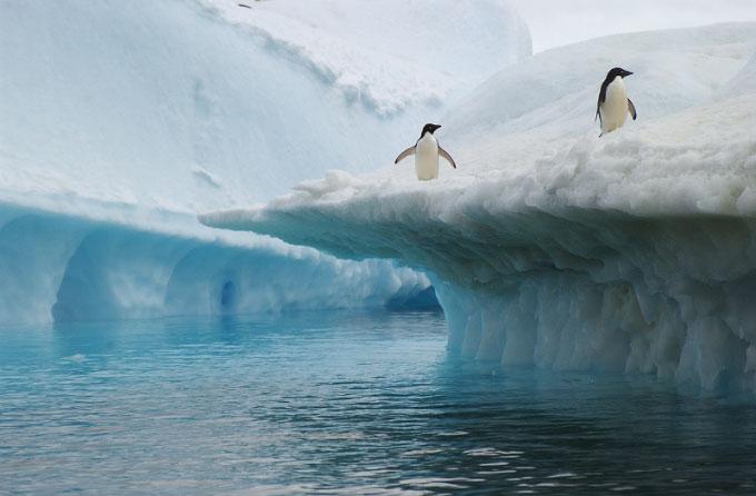 Antarctica26