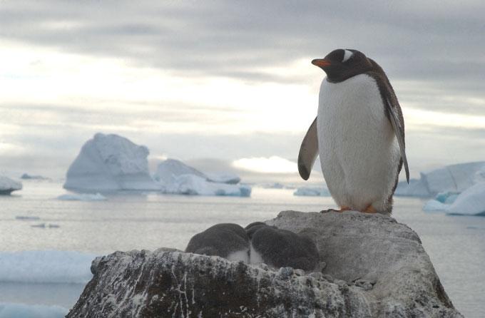 Antarctica27