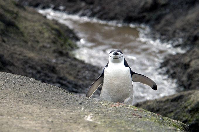 Antarctica30
