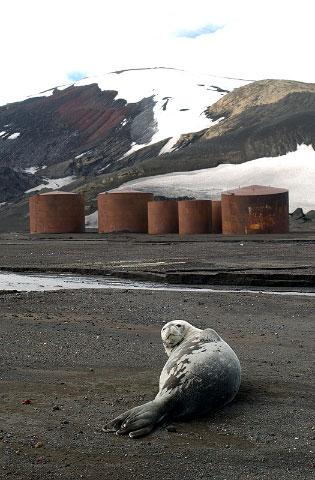Antarctica31
