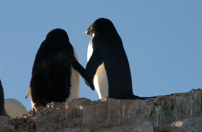 Antarctica35