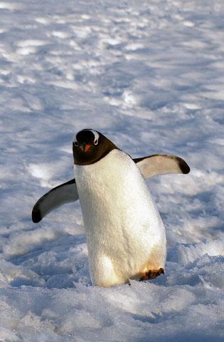 Antarctica37
