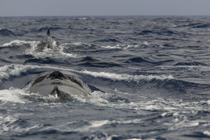 whales006