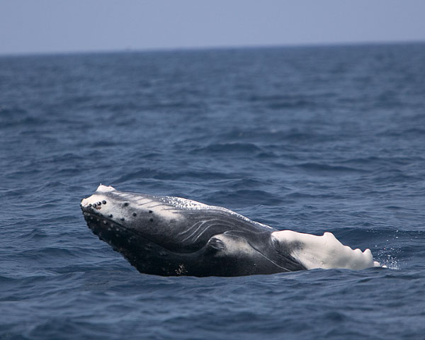 whales008