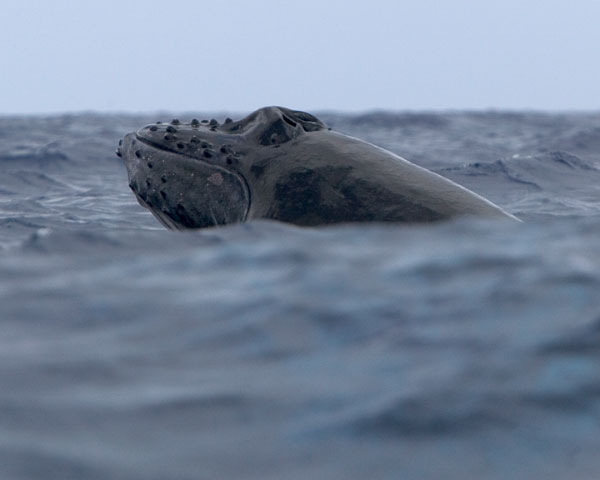 whales011