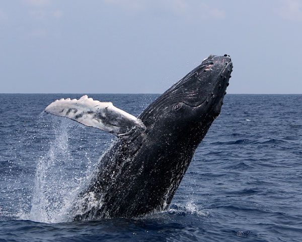 whales012