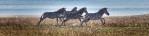 Zebras run next to the Chaminuka River.